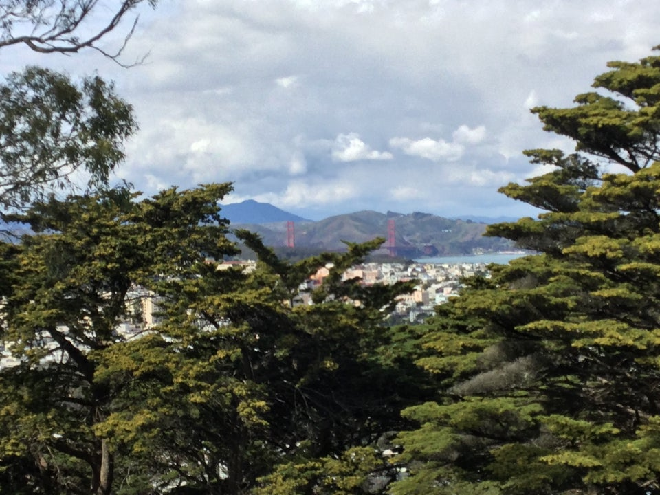 Distant and clear view of Mount Tam, the Marin Headlands, Golden Gate Bridge, a bit of the bay, San Francisco buildings, tall trees in the foreground at the top of Buena Vista Park