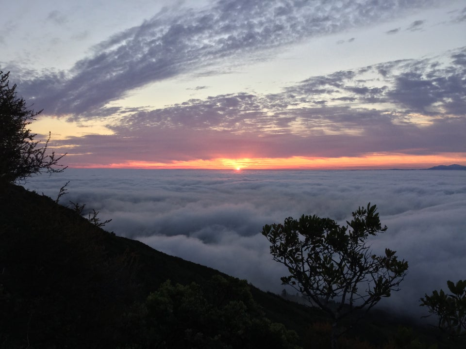 The sun rising just above the low clouds, with the Mount Tam ridge and nearby trees backlit in the foreground