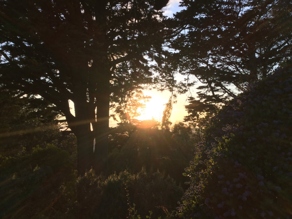 Sunset between trees at Buena Vista Park, sunbeams glowing past, and backlighting the bushes.