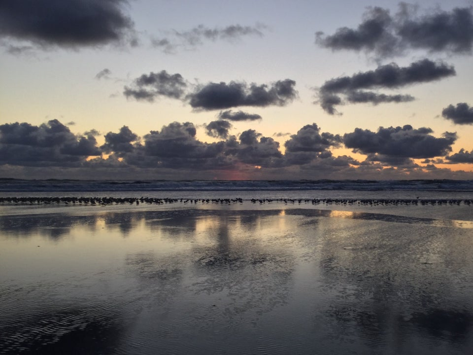 Hundreds of small birds backlit walking on the sand just at the edge of the beach where it meets the waves, cumulus clouds above the ocean, reflected in the wet sand below.
