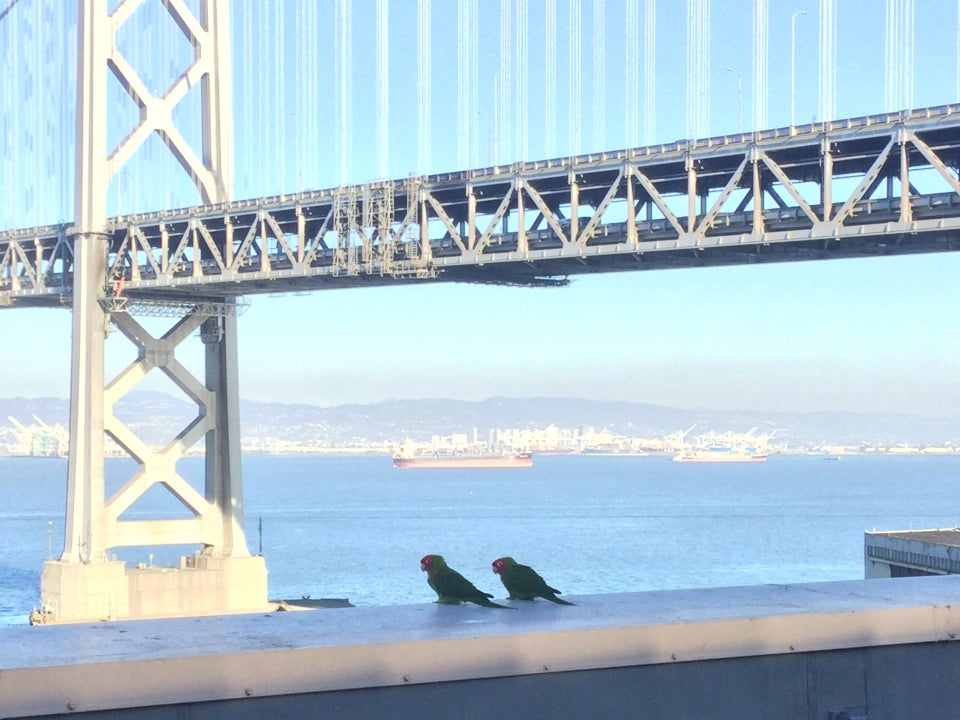 Bay Bridge in the sun, Port of Oakland in the distance, a large container ship in the bay, two parrots on the ledge immediately nearby.