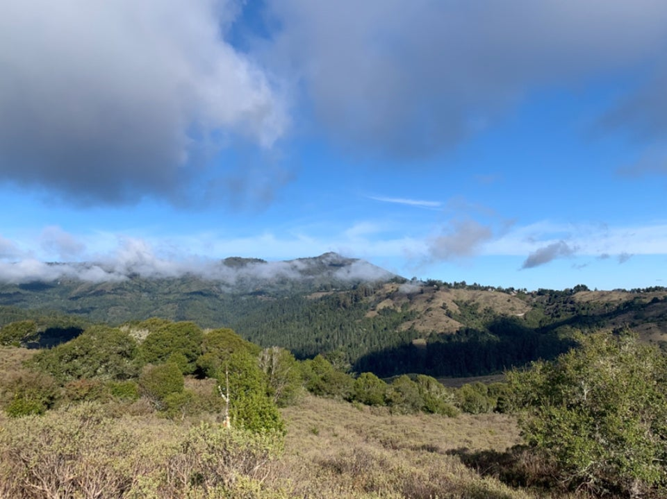 Mount Tam with green hills under a mostly blue sky with a few ominous grey / dark grey clouds, light green bushes in the foreground on Dias Ridge.