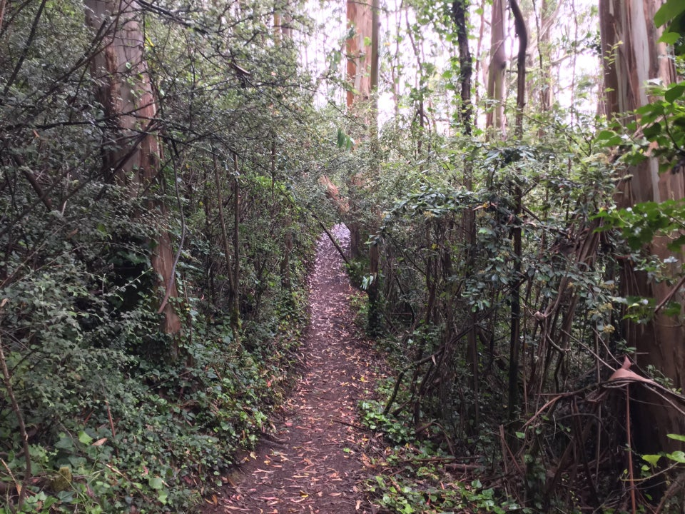 Forested single-track part of SCA trail, trees and greening lining both sides and covering the canopy.