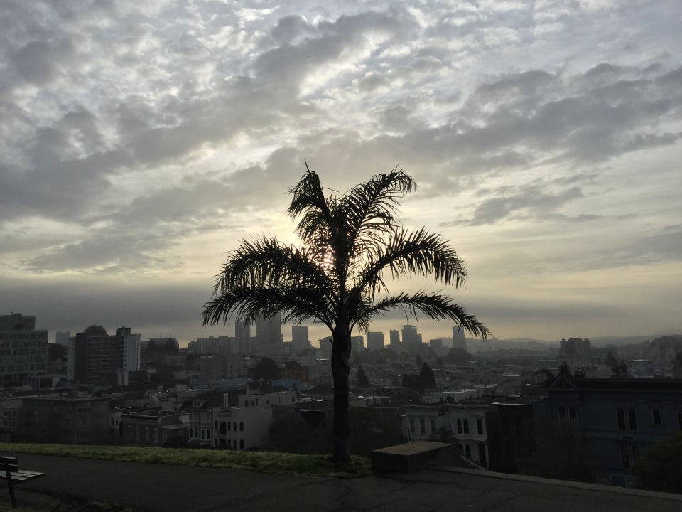 Palm tree at Alta Plaza Park with the San Francisco skyline behind it, mostly overcast clouds above, lit by a rising sun.