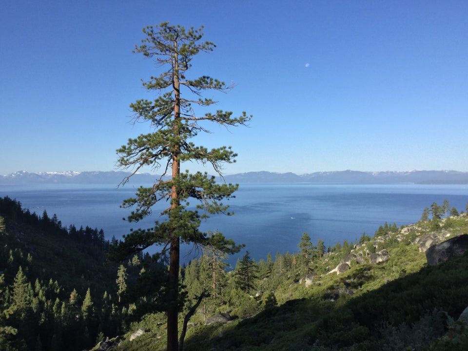 Tall tree in the foreground, Lake Tahoe and western mountains in the background viewed from Tunnel Creek Road