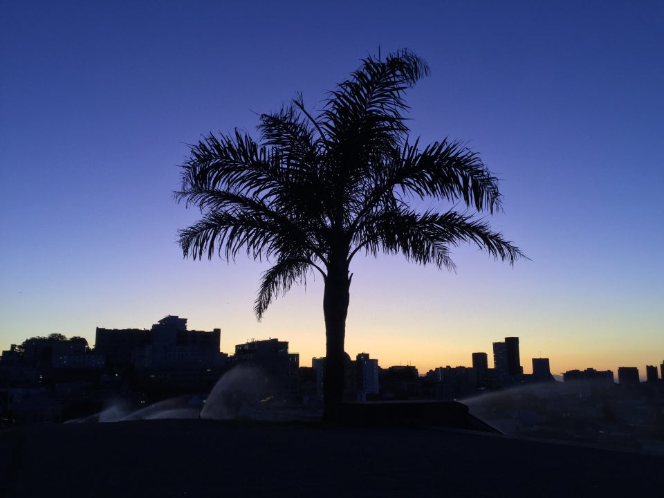 Palmtree with a cityscape behind it barely backlit in orange which turns into a deep blue higher up into the sky, sprinklers clearly visible watering the grass in the park.