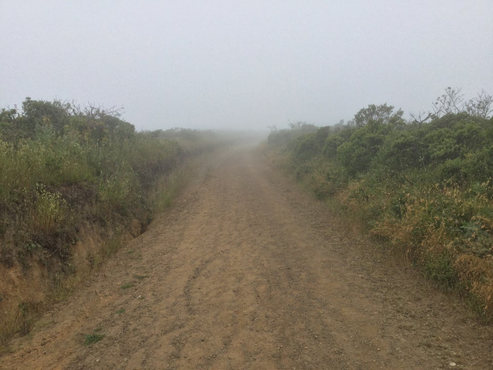 Looking back down Fox trail as it disappears into the fog