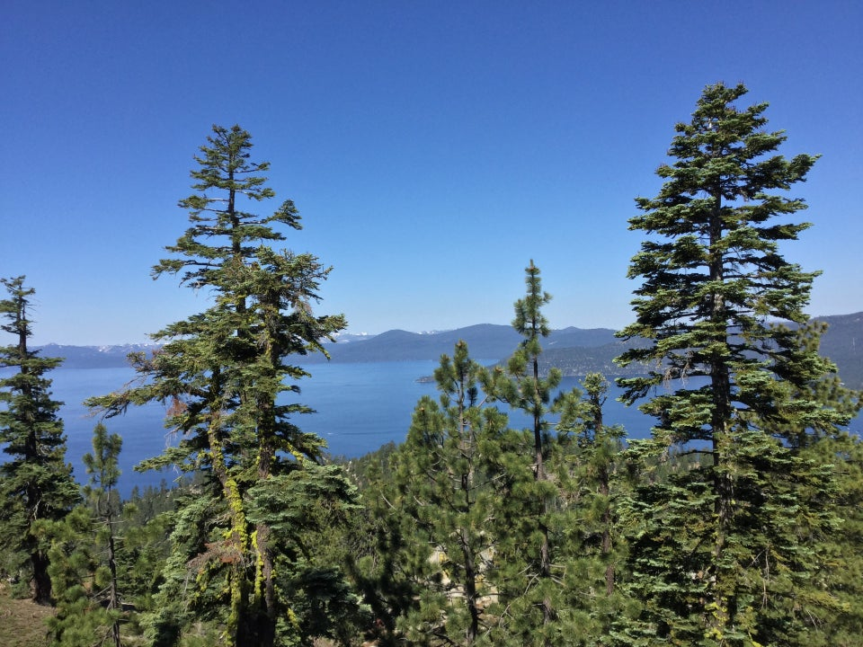 Tall trees near Tunnel Creek road, Lake Tahoe in the background