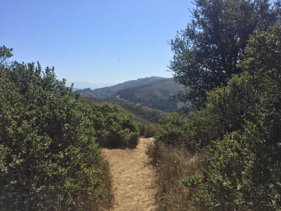 Looking south to Miwok cut-off trail, tall green bushes on either side, Marin headlands in the distance.