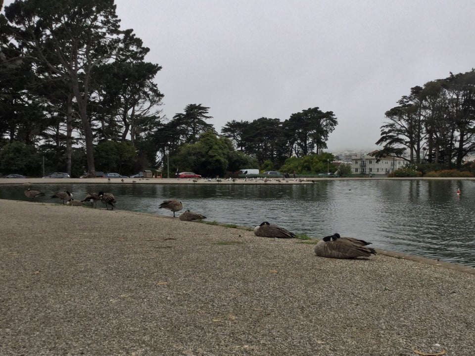 Geese sleeping on the shore of Spreckels Lake