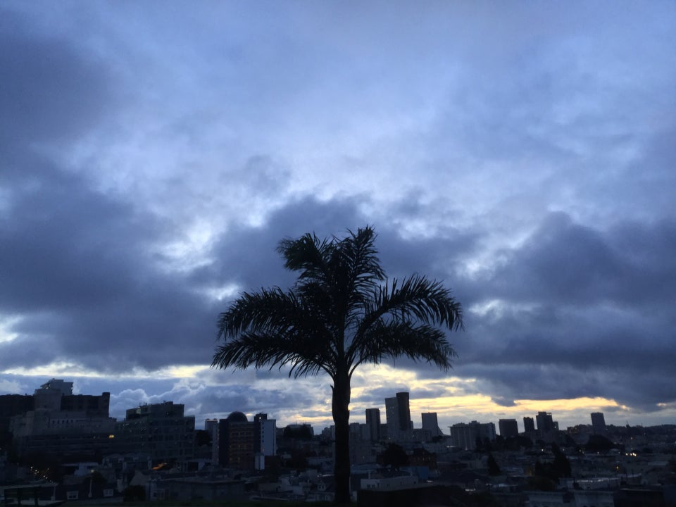 Blue grey sky, mostly cloudy, sunrise lighting barely peaking through some of the clouds, just above the cityscape in the background, a single palm tree in the foreground at Alta Plaza park.