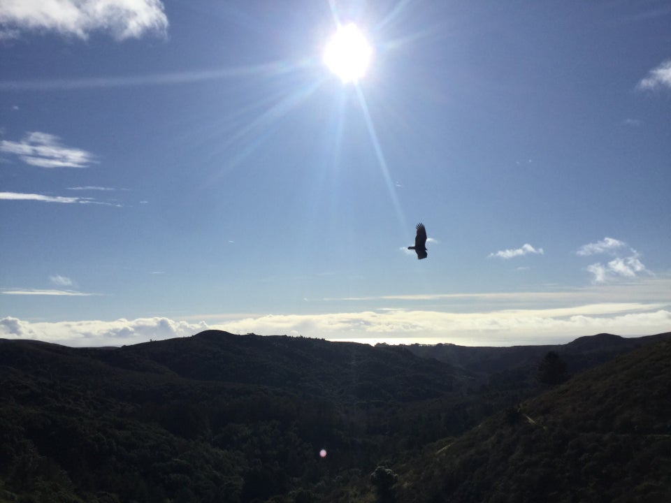 Bright sun shining at the top, with a few sunbeams across a blue sky with scattered clouds, over a distant cloudy horizon, and beautiful green hills in front, a backlit bird with its wings spread flying from left to right.