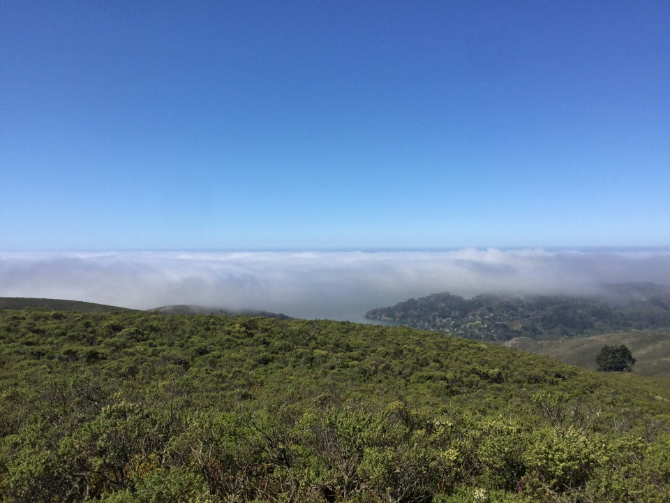 Clear blue skies above the Pacific Ocean in the distance, fog bank over Muir Beach, and thick green bushes in the foreground.