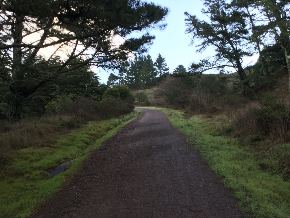 Marincello trail heading uphill with green grasses on either side, trees on the outside edges, blue sky in the distance