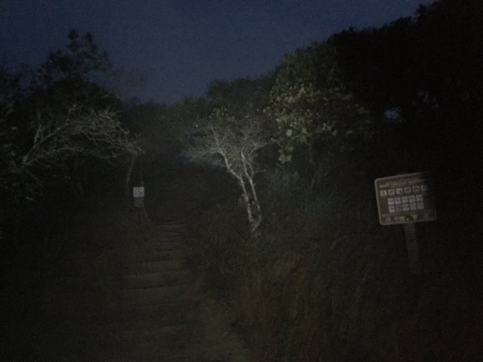 Start of Temelpa trail, in the dark, lit unevenly by a headlamp