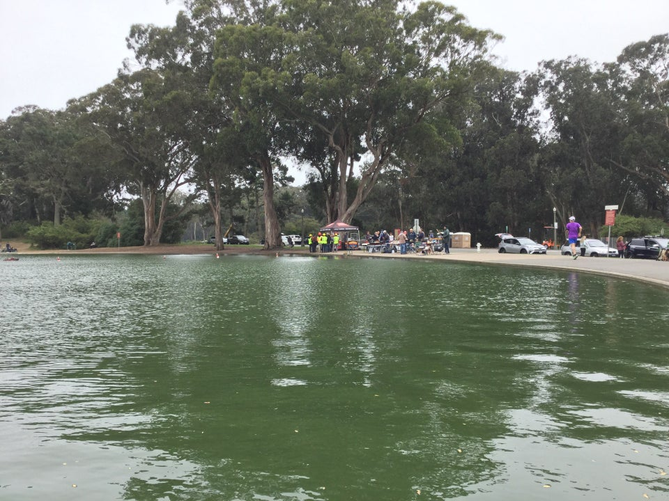 Spreckels Lake with green water, a few radio controlled model boats, and eucalyptus trees on the opposite shore