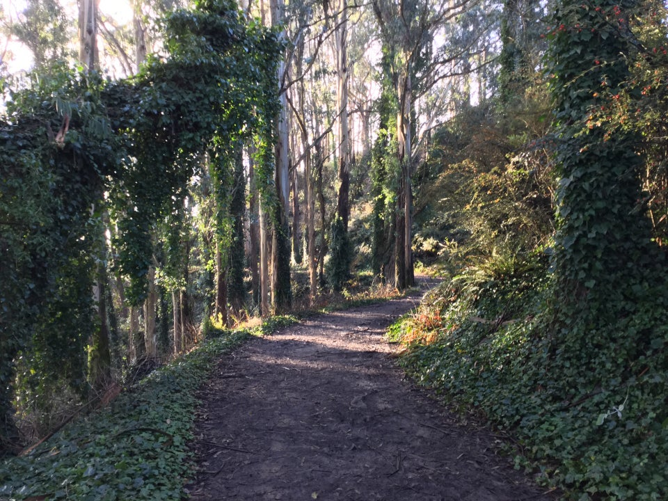 Trail through a sunlit eucalyptus forest