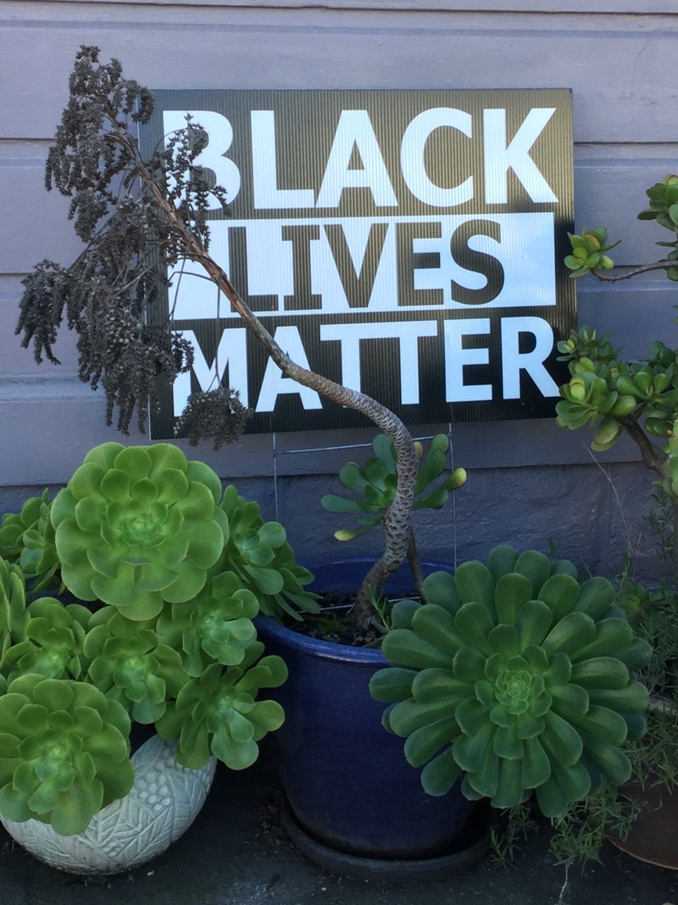 BLACK LIVES MATTER sign standing outside against the side of a house, behind a few potted plants, mostly succulents.