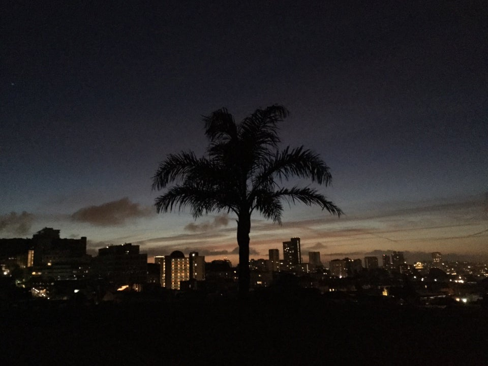 Dark sky above the first lights of dawn, backlighting a palmtree, faint orange glow on the horizon behind city buildings with their lights on.