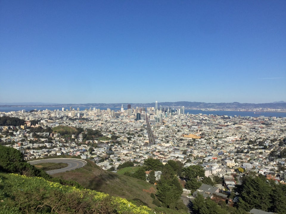 Midday view of clear blue sky above the East Bay, downtown San Francisco bisected by Market Street, buildings spreading out to both sides, nearby Twin Peaks incline with hairpin turn, green hillsides and trees, a band of yellow flowers and green bushes just below.