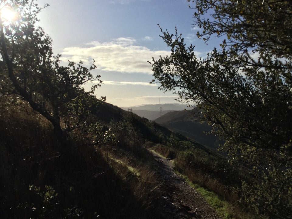 Trees on either side of a single-track SCA trail with the Golden Gate Bridge towers emerging from the Marin Headlands in the distance, blue sky with a couple of bands of clouds.