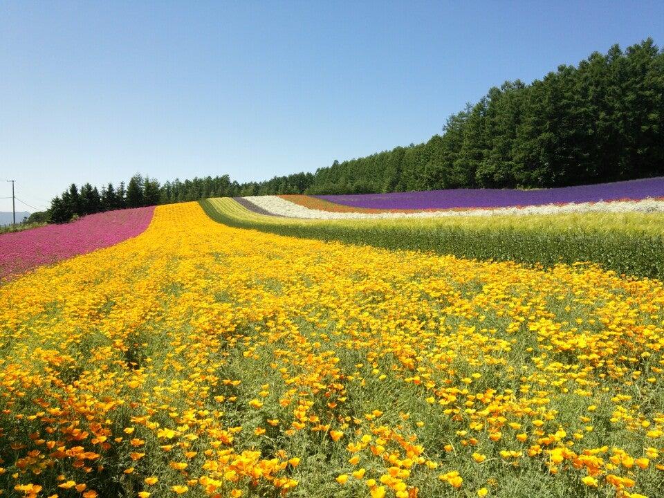 北海道 富田農場