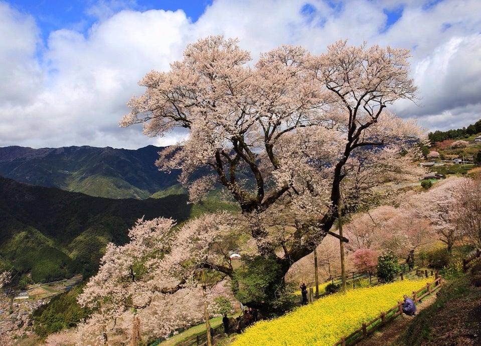葫蘆櫻公園(ひょうたん桜公園)