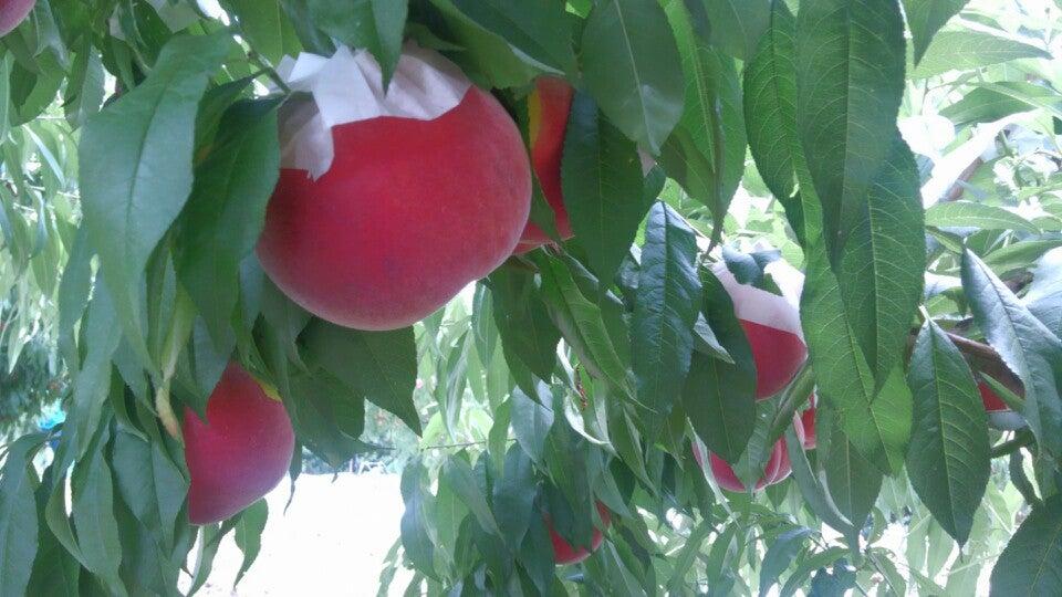 萩原水果農園