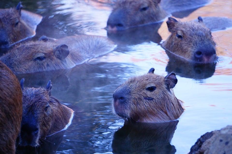 伊豆仙人掌動物公園