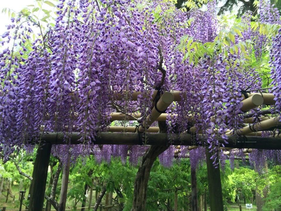 春日大社萬葉植物園