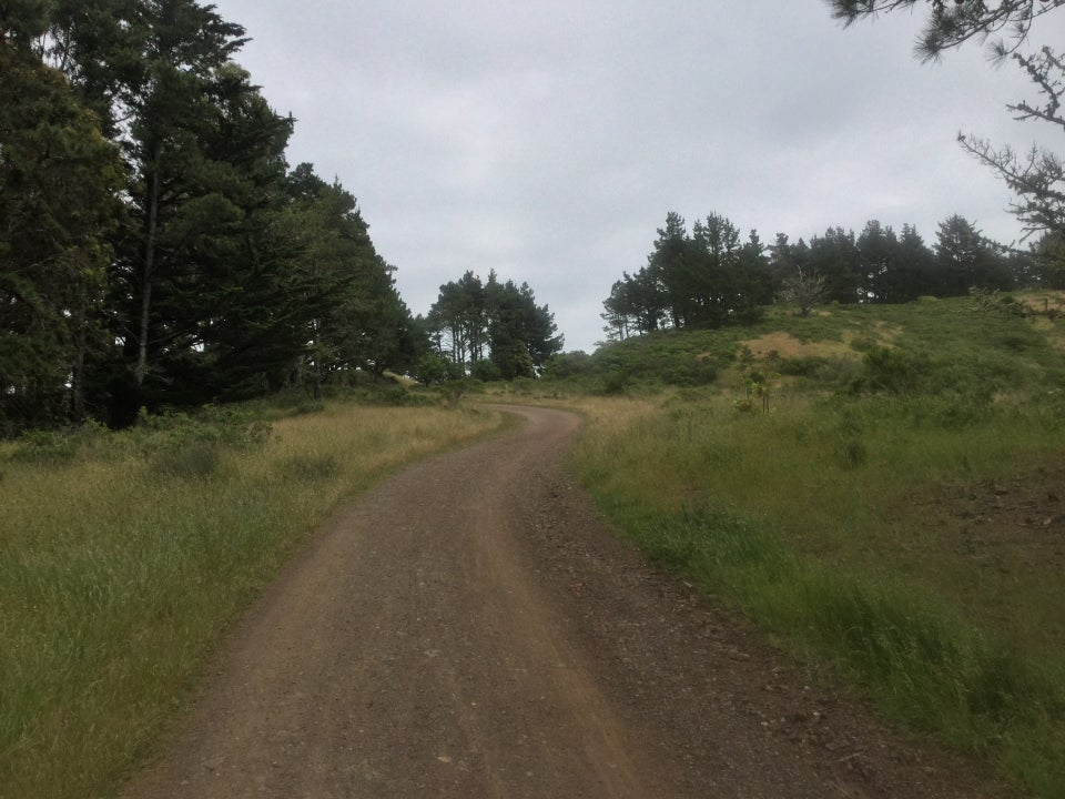 Looking up Marincello trail, grass on both sides, trees on the left side and in the distance