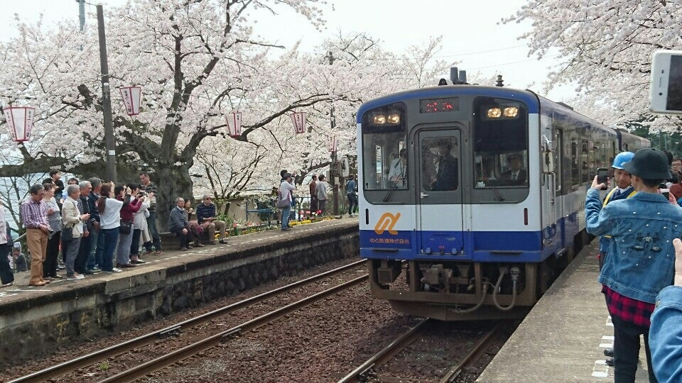 用櫻花隧道迎接下月台的旅人們 能登鹿島站