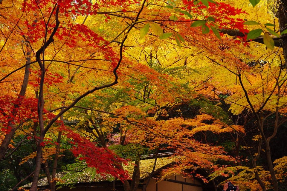 三溪園(橫濱)