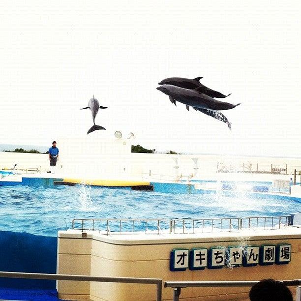 沖繩縣 海豚劇場 沖繩海洋博覽會紀念公園