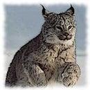 Tatyana Lynx
