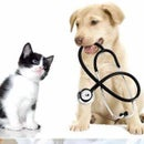 Animal Hospital Kitchener