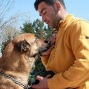 K9 köpek Eğitimi