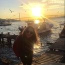Ariana Navaryan