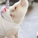 Pig McCoy