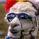 Info Llama