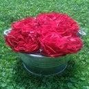 Rose Castlenic