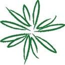 Green Daisies