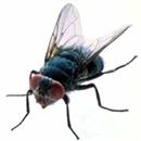 Buzz Dæfly