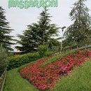 Massarroni Vivai - Garden