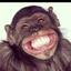 Gorilla C.