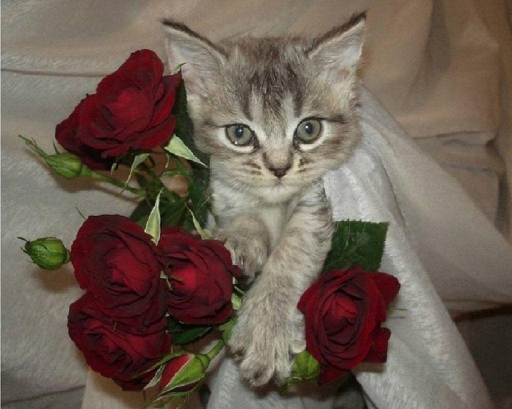 Картинки цветы от чистого сердца, днем рождения подруге